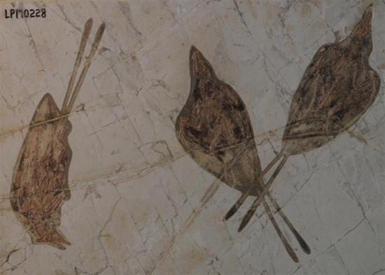 125 milyon yıl önce yaşayan kuşlar