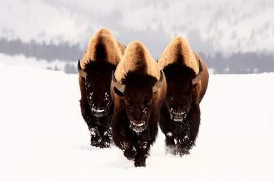 En güzel doğa fotoğrafları
