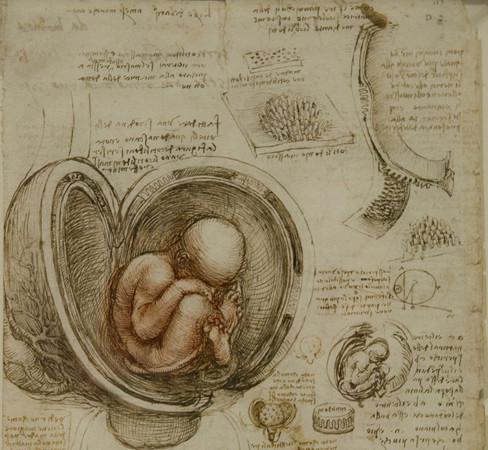 Da Vincinin vücutları sergilenecek