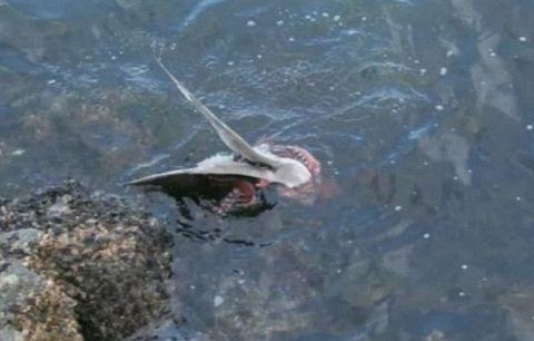 Ahtapot martı avladı