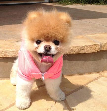 Dünyanın en sevimli köpeği