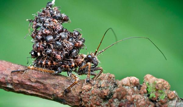 En sıradışı böcekle tanışın!