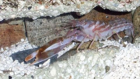 Dünyanın en şaşırtıcı 7 deniz canlısı