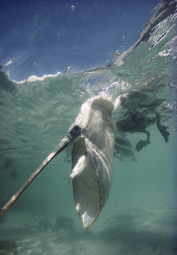 Tek hamlede balık avı