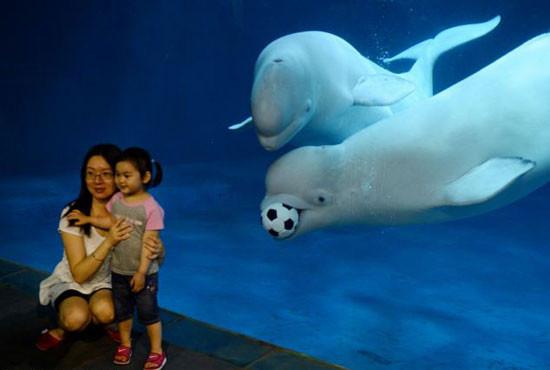 Beyaz balinalar şaşırttı