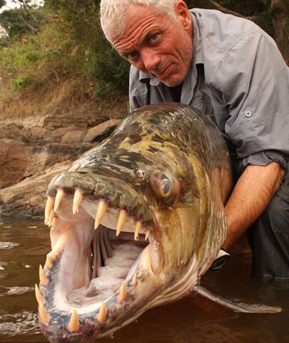 Nehirden canavar çıktı