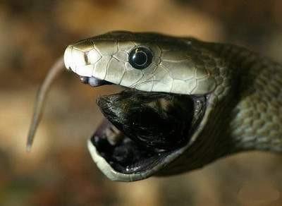 Yılanın dehşete düşüren görüntüleri