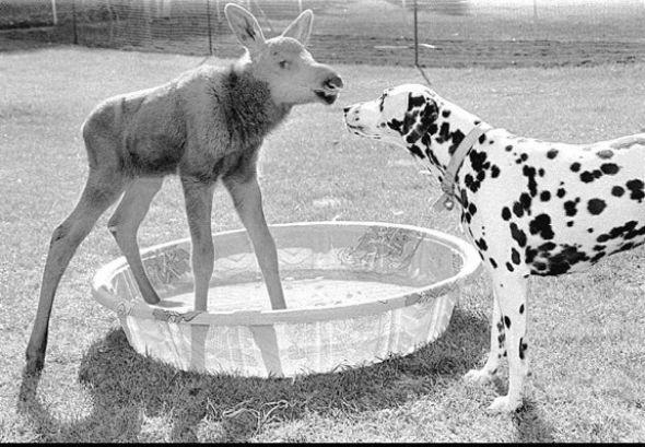 Hayvanlar aleminin sevgi dolu mensupları şaşırtıyor!