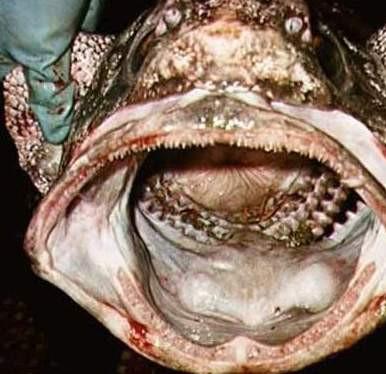 Su altının en dişli canlıları
