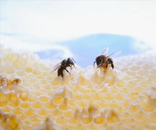 Arı polenini hafife almayın