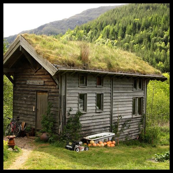 Muhteşem orman evleri