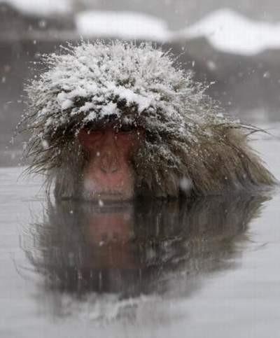 Babunların karda kaplıca keyfi