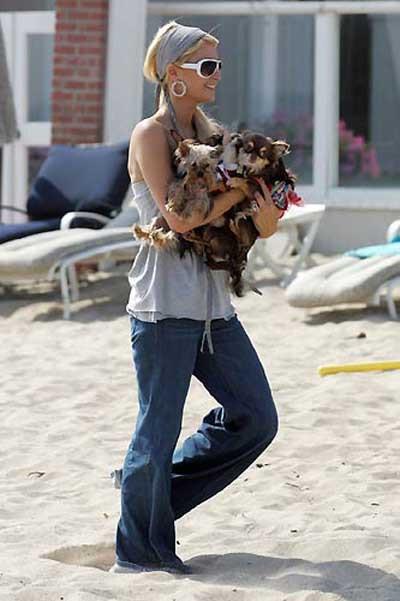 Paris Hiltona köpek soruşturması !