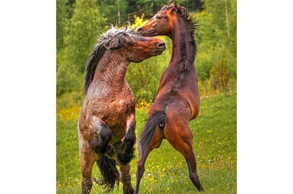Hayvanların inanılmaz anları...