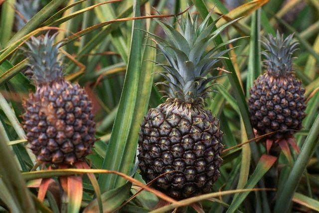 Ananas'ın faydaları