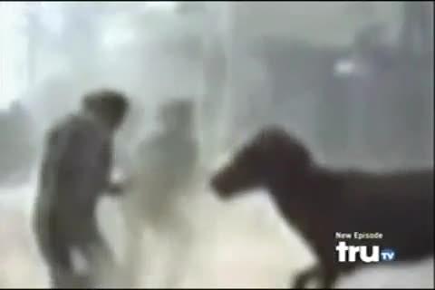 Atın intikamı dehşete düşürdü