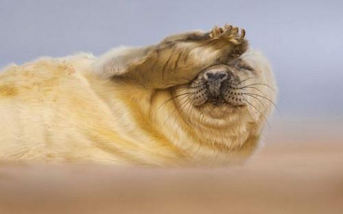 Vahşi yaşamdan ödüllü fotoğraflar