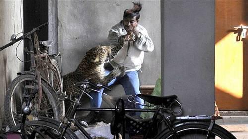 Hayvanlar saldırırsa