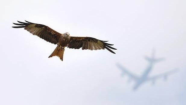 2012 Veolia Doğa Fotoğrafları