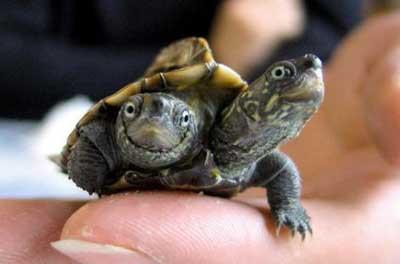 Çift başlı doğan canlılar