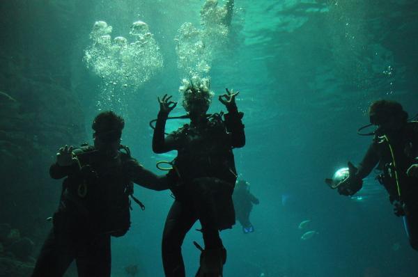 Deniz Akkaya, köpek balıkları ile yüzdü