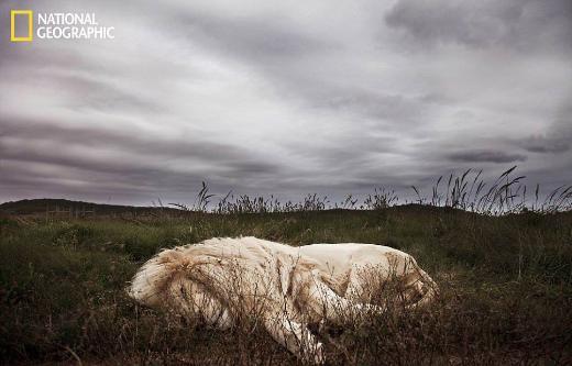 National Geographicten haftanın en iyi sekiz fotoğrafı
