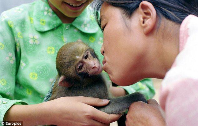 Maymunları böyle emziriyor