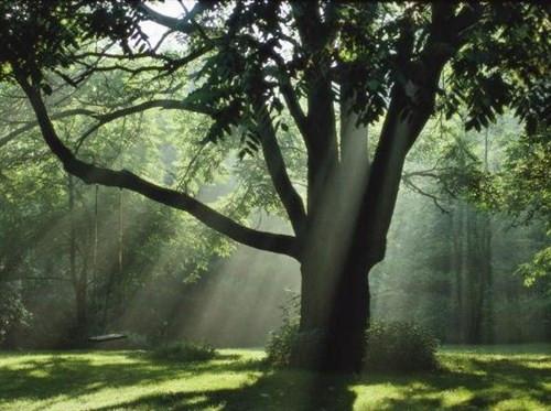 Burcunuza göre hangi ağaçsınız?