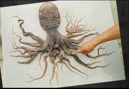 Dünyanın en garip canlıları