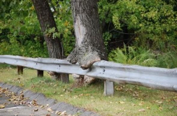 Bisiklet yutan ağaç