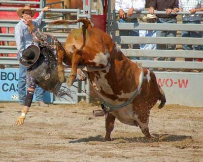 Çılgın rodeocular