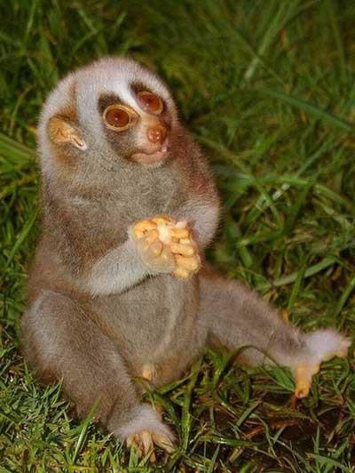 En komik hayvan görüntüleri