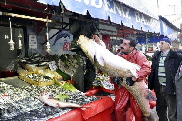 Dev turna balığı yakalandı