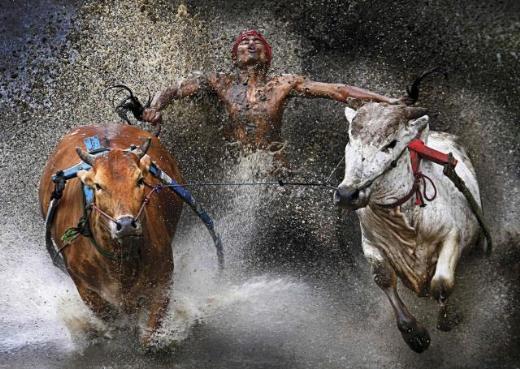 Dünya Basın Fotoğrafları 2012