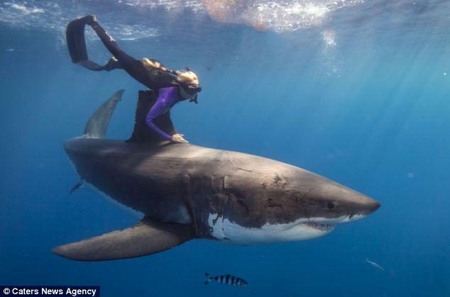 Jaws ile dünya turu