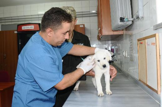 En çok veterinerler iş buldu