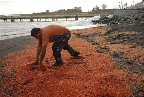 Karides sahili