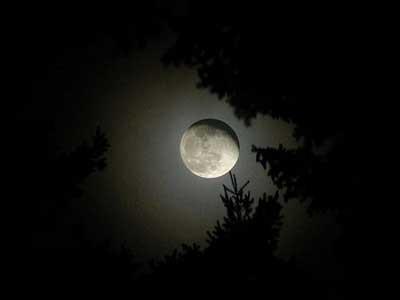 Ayı hiç böyle gördünüz mü ?
