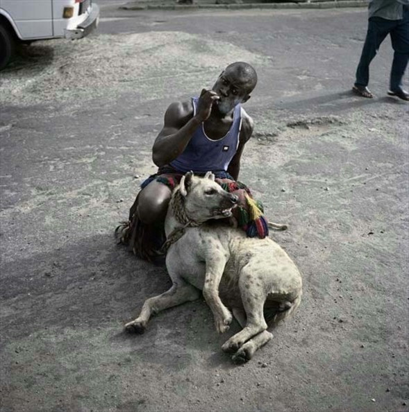 Afrikanın evcil hayvanları!