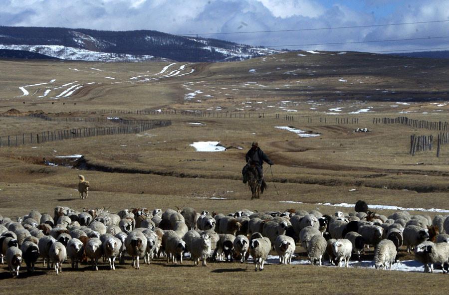 Zamanın durduğu yer: Moğolistan