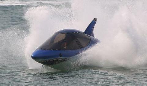 Bu köpekbalığı ısırmıyor!