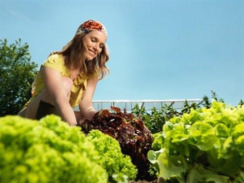 Organik besin gerçeği