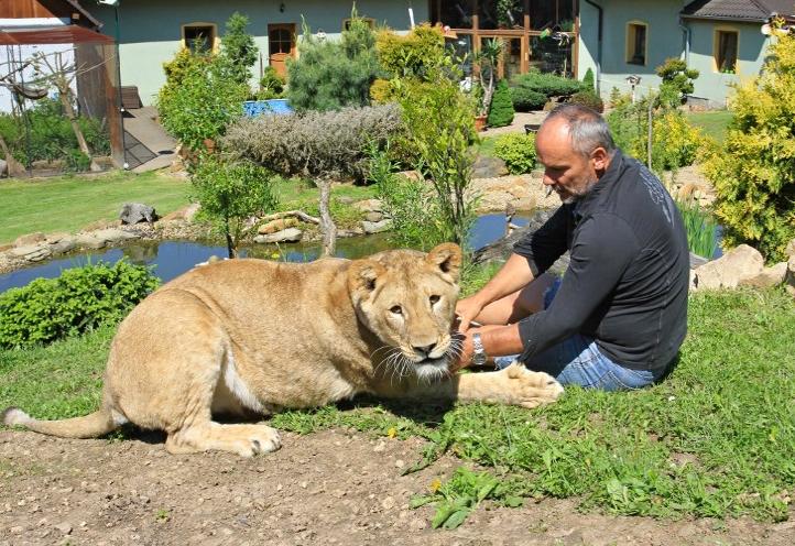 Aslanlarla beraber yaşıyor...