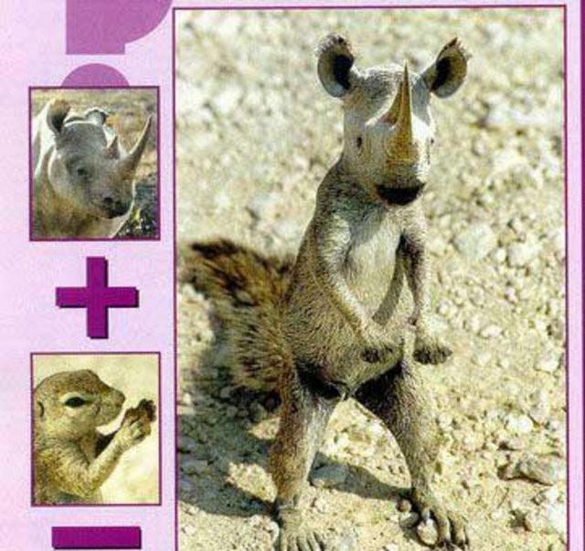 Sıradışı hayvanlar!