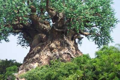 Bunların ağaç olduğuna inanmak çok zor