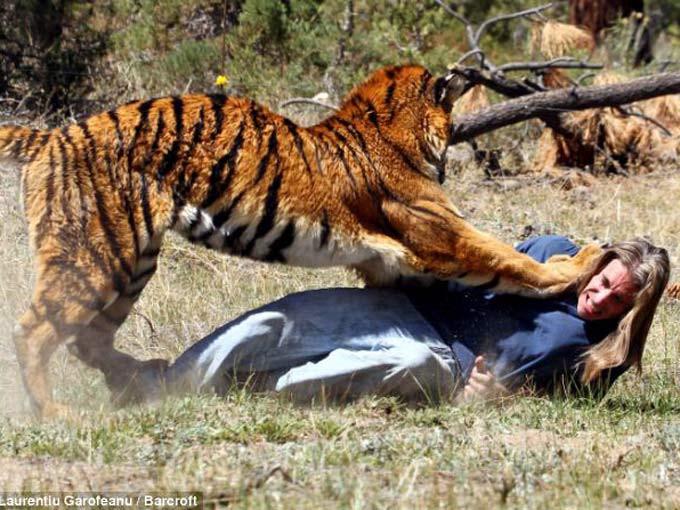 Kaplanlarla güreşin sonu
