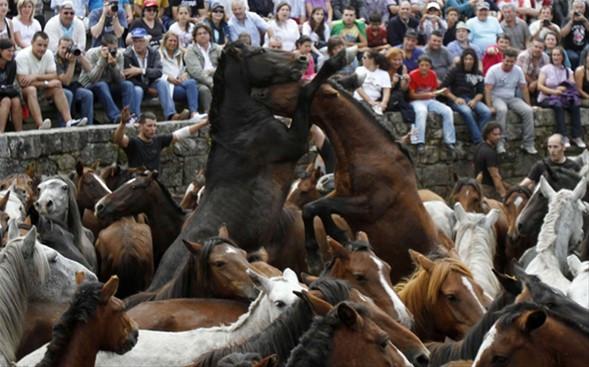 Boyun eğmeyen vahşi atlar!