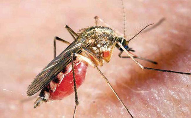 Sivrisinekler hakkındaki bilinmeyen gerçekler