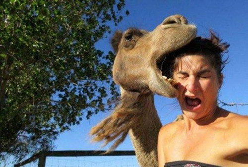 Hayvanların insanlara saldırdığı en ilginç 7 an
