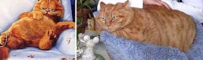 İşte gerçek Garfield